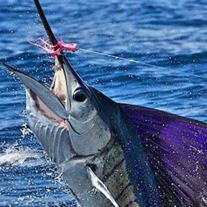 Marlin, sportfishing in costa rica, Manuel Antonio and Quepos, tours and activities offered at EOC