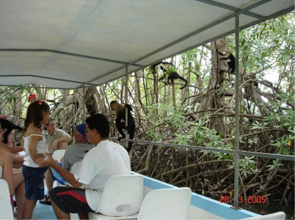 Mangrove boat tour, tours and activities offered at EOC