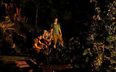 "The rockin' ""nightlife"" of the jungle"